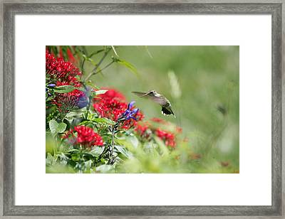 Art In Motion Framed Print by E Mac MacKay
