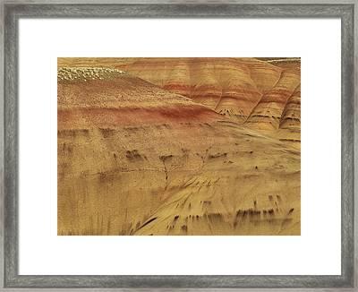 Art In Nature Framed Print