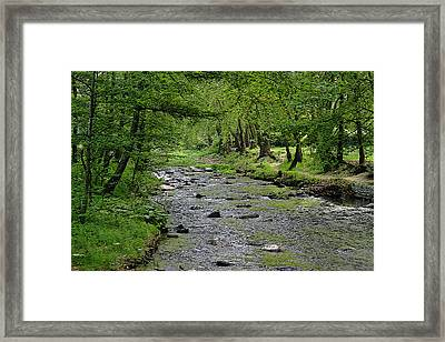 Art In The Forest Framed Print by Milena Ilieva