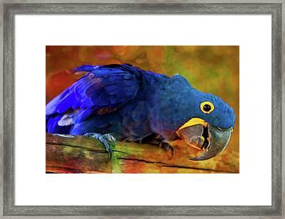 Art Loving Blue Macaw Framed Print