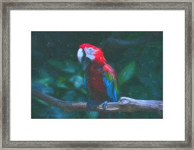 art Macaw 1 Framed Print