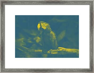 art Macaw 2 Framed Print