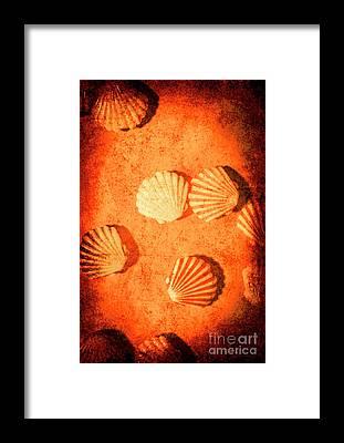 Mussel Framed Prints