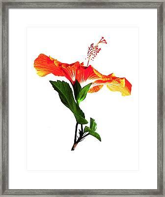 Art Orange Framed Print