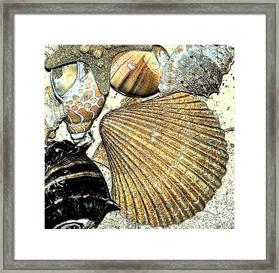 Art Shell 2 Framed Print by Stephanie Troxell