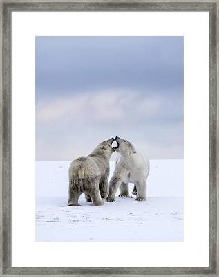 Artic Antics Framed Print