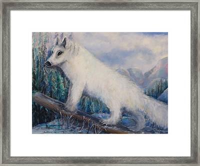 Artic Fox Framed Print by Bernadette Krupa
