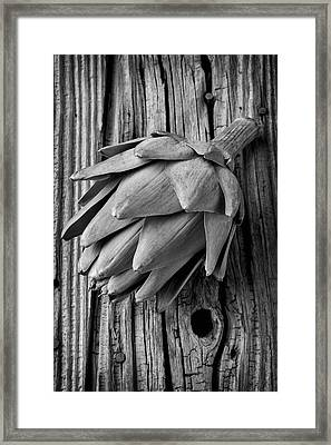 Artichoke In Black And White Framed Print by Garry Gay