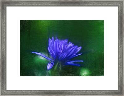Artistic Blue Aster Framed Print by Leif Sohlman
