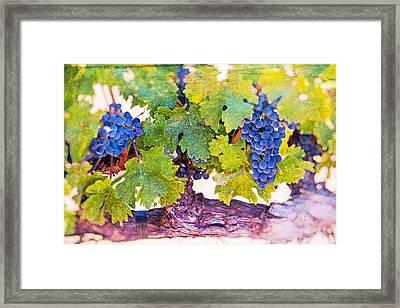 Artistic Grape Vines Framed Print by Garry Gay