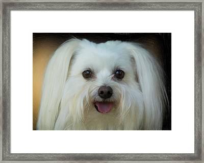 Artistic Puppy Framed Print