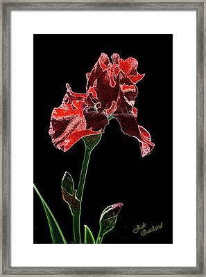 Artistic Red Iris Framed Print by Judi Quelland