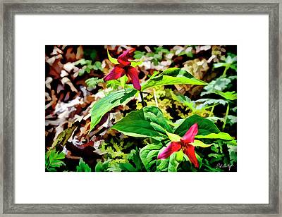 Artistic Red Trilliums Framed Print