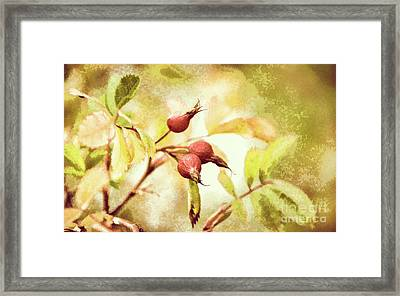 Artistic Rose Hips Framed Print
