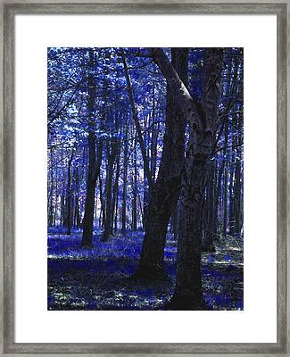 Framed Print featuring the photograph Artistic Tree In Blue by Michelle Audas