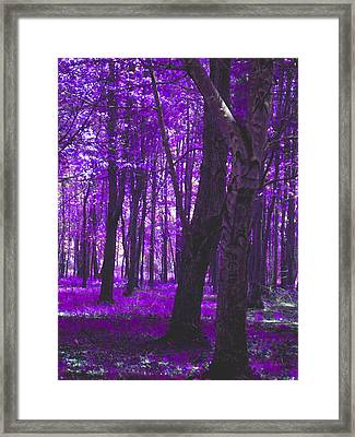 Framed Print featuring the photograph Artistic Tree In Purple by Michelle Audas