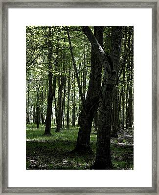 Framed Print featuring the photograph Artistic Tree by Michelle Audas