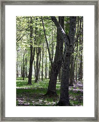Framed Print featuring the photograph Artistic Tree Original by MicA