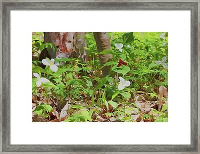 Artistic Trilliums Framed Print