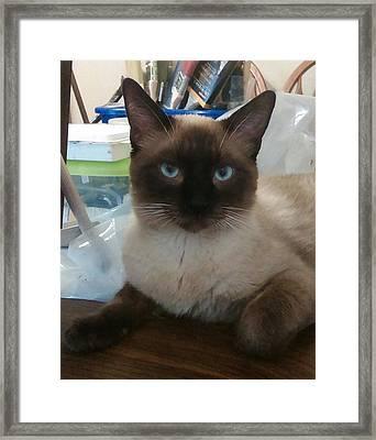 Artist's Assistant Framed Print