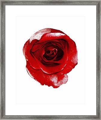 Artpaintedredrose Framed Print