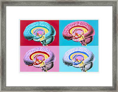 Artworks Showing The Limbic System Of The Brain Framed Print by John Bavosi