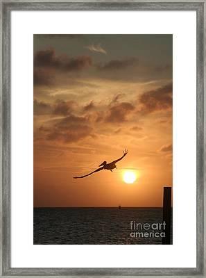 Aruba Pelican II Framed Print by Paula Deutz