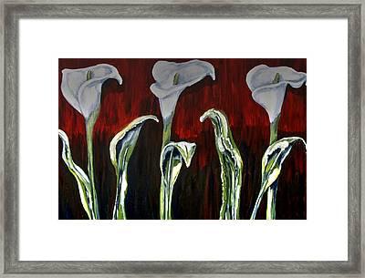 Arum Lillies Framed Print