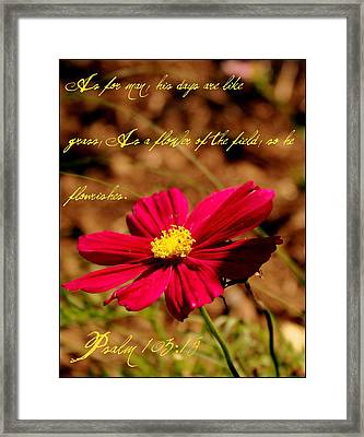 As A Flower Of The Fields Framed Print by Elizabeth Babler