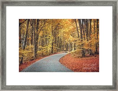 As Autumn Falls Framed Print