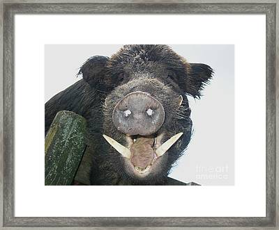 As For This Handsome Brute Framed Print