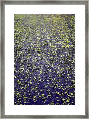 As I Walk Framed Print by The Art Of Marilyn Ridoutt-Greene