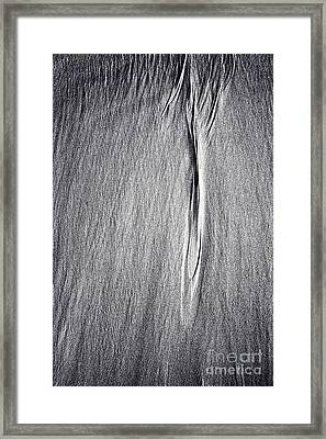 As Light As A Feather  Framed Print by Tim Gainey
