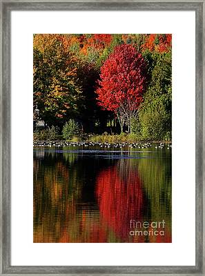Framed Print featuring the photograph As Red As It Can Be by Aimelle