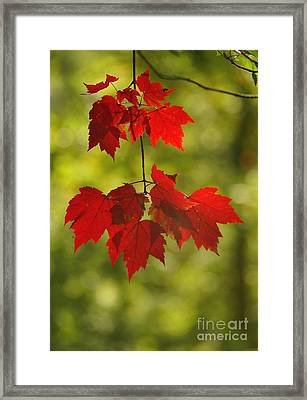 Framed Print featuring the photograph As Red As They Can Be by Aimelle