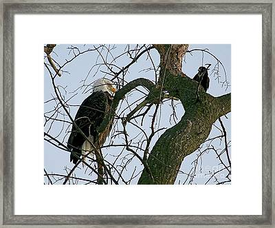 As The Eagle Looks On Framed Print by Sue Stefanowicz