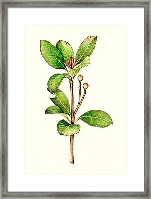 Framed Print featuring the painting As The Twig Is Bent The Tree Inclines. by Heidi Kriel