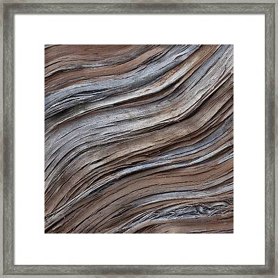 Ascend Framed Print by Susie Frazier