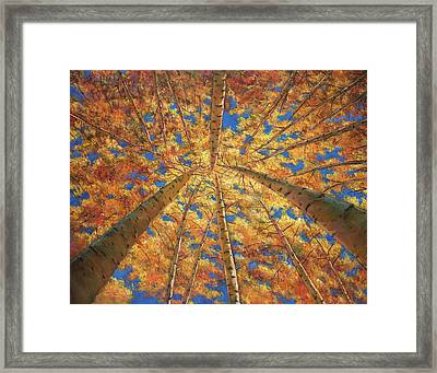 Ascension Framed Print by Johnathan Harris