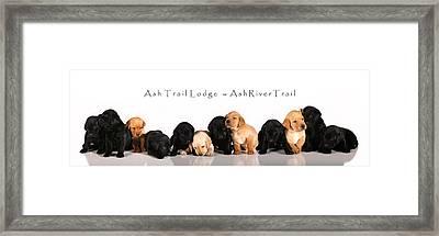 Ash Trail Lodge Pups Framed Print by Pam Gabriel