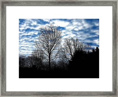 Ash Trees Against A Mackerel Sky Framed Print
