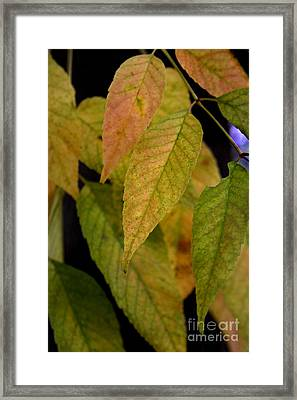 Ashes To Ashes IIi Framed Print by Linda Merkel