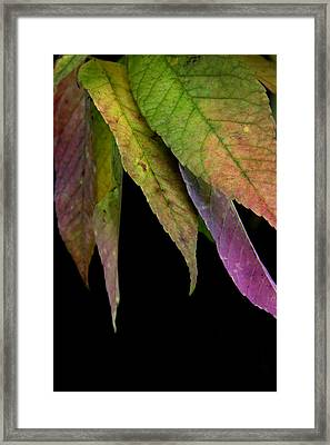 Ashes To Ashes Framed Print by Linda Merkel