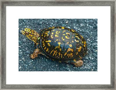 Turtle Framed Print