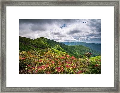 Asheville Nc Blue Ridge Parkway Spring Flowers North Carolina Framed Print by Dave Allen