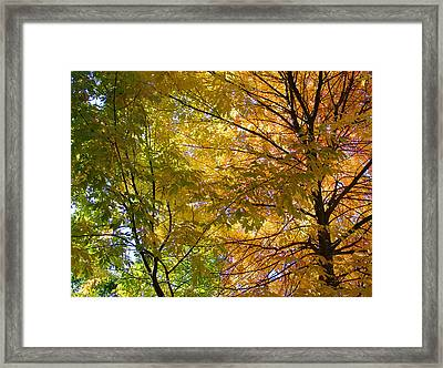 Framed Print featuring the photograph Ashland Autumn by John Norman Stewart