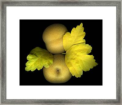 Asian Brown Pears Framed Print