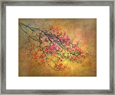 Asian Dogwood Framed Print