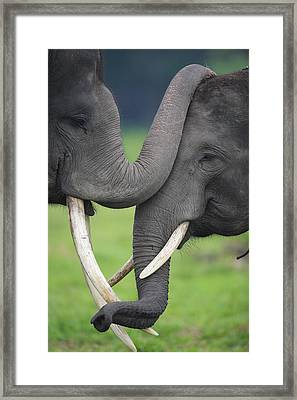 Asian Elephant Greeting Framed Print by Cyril Ruoso