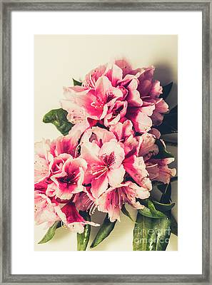Asian Floral Rhododendron Flowers Framed Print